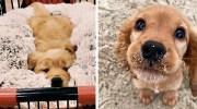 Картинки про тварин, які є найкращим антидепресантом у світі!