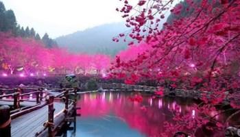 Неймовірно красива весна в Південній Кореї