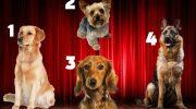 Швидкий тест: вибери собаку і дізнайся, який чоловік тобі ідеально підходить