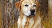— Я щодо собаки.Кажуть, Ви собаку віддаєте?— запитав Петро Іванович.  — А я його викинула, — відповіла жінка, — ось ще, тільки псини мені тут не вистачало