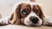 У мене життя круто змінилося після того, як я придбав собаку. Тепер я живу без вихідних.Я ніколи не розслабляюся.  Вранці і ввечері прогулянка чекає мене