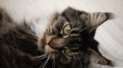 Кіт ходив за Юлею по п'ятах, не відстаючи ні на крок.Немов контролював.Навіть в туалет намагався прорватися. Юлю така поведінка нахабного кота дуже напружувала.