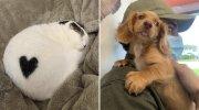 15 неймовірно милих і пухнастих створінь, які наповнюють наше життя радістю і позитивом