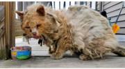 Бродячого кота знайшли в пастці, але завдяки людям він знову став домашнім
