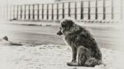 Дивний пес, який всіх лякав своїм виглядом, відгукувався на кличку Чудовисько або Чудик, виявився добрішим і красивішим найблагородніших і породистих собак