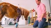 Він врятував близько 20 тисяч тварин. Ортопед з Америки ставить протези кішкам, верблюдам і навіть слонам