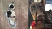 20 кумедних собак, які радіють життю
