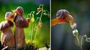 Казкові макро-фото прославили українського фотографа на увесь світ