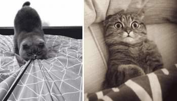 20 суперових фото, в яких вся суть котів