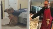 20 строгих батьків, які клялися не заводити тварин, але магія цуценяток та кошеняток зробила свою справу