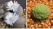 10 рослин, які на Землю явно підкинули інiопланетяни