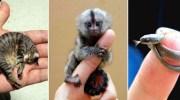 Мініатюрні та прекрасні: ТОП-10 найменших тварин на Землі