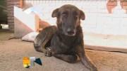 Вірний пес подолав 160 кілометрів, щоб знайти людей, які його колись врятували