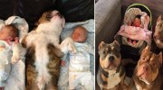 12 фото, які показують, як сильно тварини люблять нас. Безумовно і безкорисливо на 100%