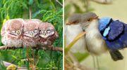 15 фотографій, які доведуть, що птахи теж люблять обійматися