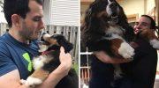 Вони виросли і стали більшими за господарів: 12 собак-велетнів