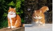 Унікальний випадок, коли у красивого кота господар – фотограф-профі