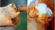 15 фото ну дуже скромних і сором'язливих тварин