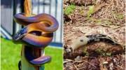 16 тварин з дивним і незвичайним забарвленням, які змусять вас сказати «Ух ти!»