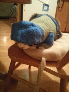 http://www.craftleftovers.com/projects/cat-hoodie-makin-me-purr-free-knitting-pattern/