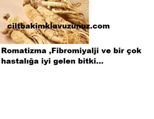 Romatizma fibromiyaljiye iyi gelen bitki