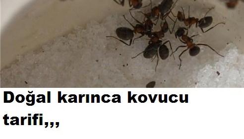 DOĞAL KARINCA KOVUCU TARİFİ