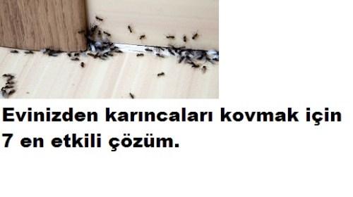 Karıncaları Evinizden Kovmak İçin 7 En Etkili Çözüm
