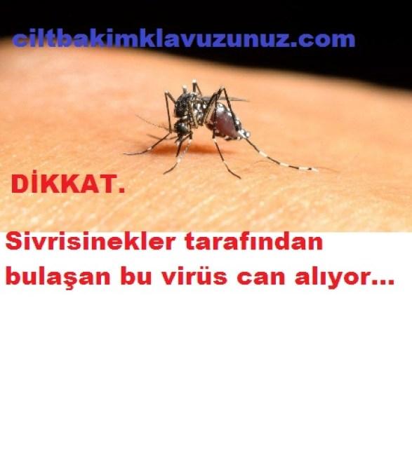 Sivrisinek Aracılığıyla Bulaşan Bu Virüs Can Alıyor