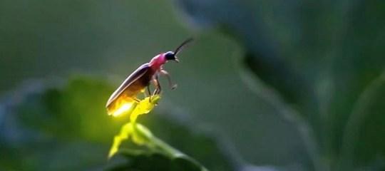 firefly lit up on a leaf