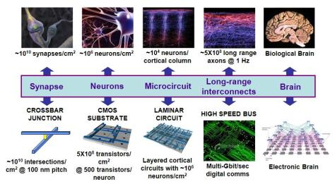 A DARPA scale of the make-up of a neuromorphic circuit and their biological equivalents.