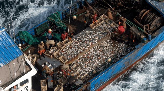 Leveraging NGOs and Volunteerism for Maritime Surveillance Against IUU Fishing