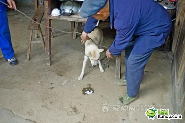 killing_dog_2