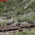Il macabro rituale di sepoltura tibetano: sepoltura a cielo aperto
