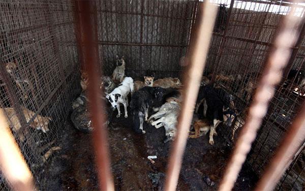 Macello per cani in Cina