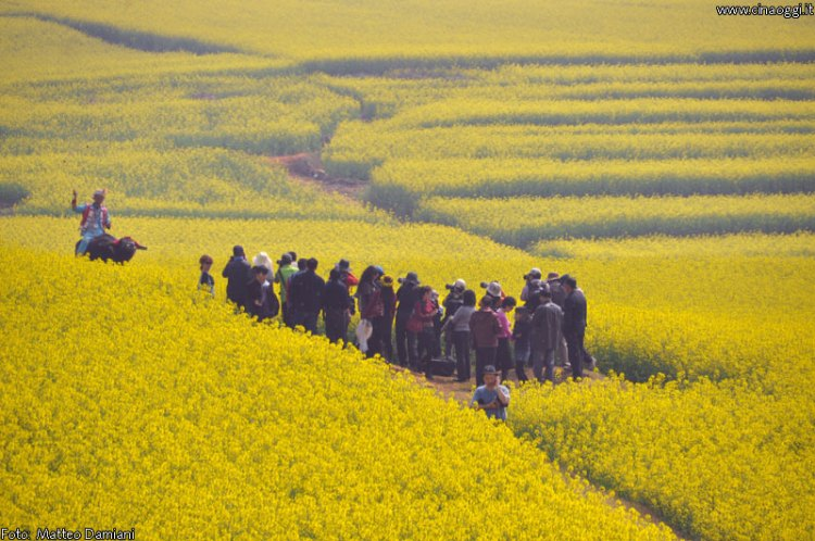 luoping_flowers_yunnan_019