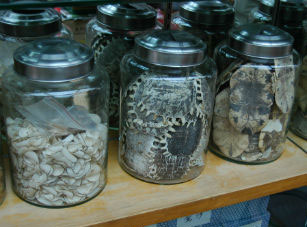 abusi animali medicina tradizionale cinese-tartarughe