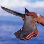 Cathay Pacific vieta il trasporto di pinne di squalo