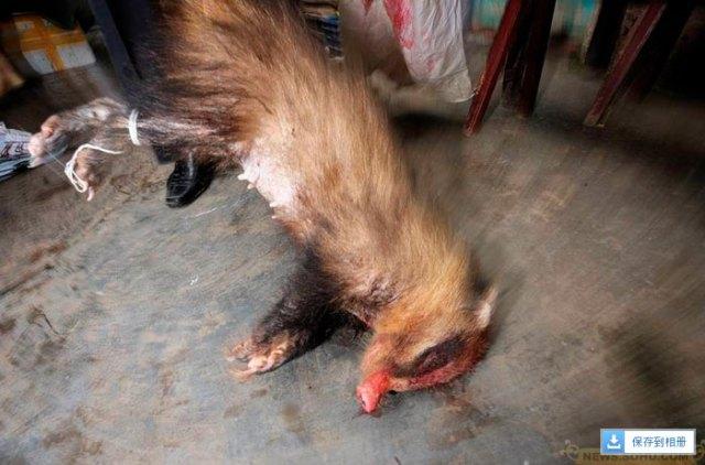 crudeltà sugli animali