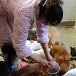 1 ragazza cinese e 70 gatti randagi