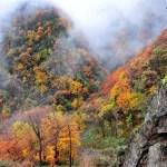 Immagini di Shennongjia, la più spettacolare foresta cinese