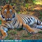 L'anno delle tigri che muoiono di fame