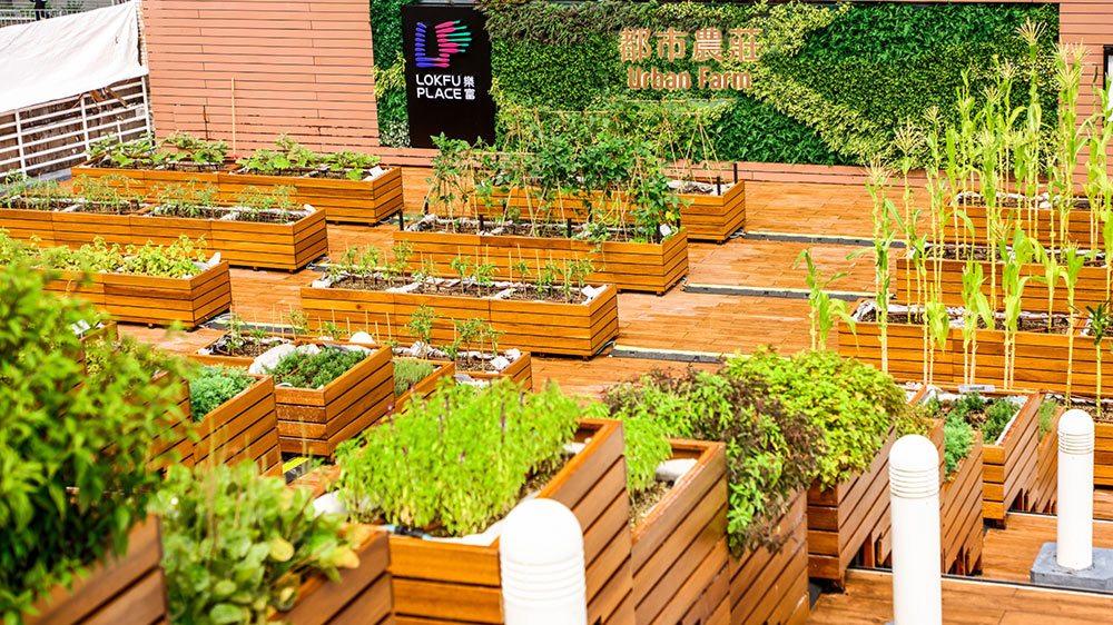 Rooftop Republic Lok Fu Urban Farm Photo Credit LINK