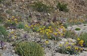 flowers in a dry canyon wash