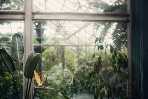 bird of paradise in lincoln park conservatory