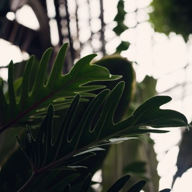 ferns as structures inside of conservatory