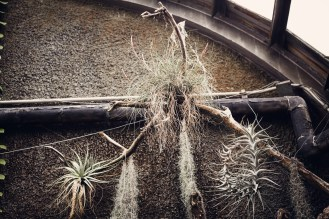 tilandsia on a wall hanging