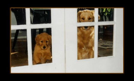 December 1994 - Tara and Kadi