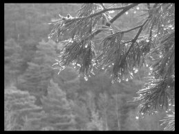 March 2, 2015 - nature in black and white