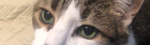 cat eyes closeup, how to hook cat's eyes