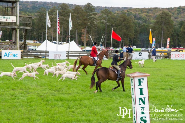 November 7, 2015 - Steeplechase at Callaway Gardens with http://www.OutdoorEvents.com. Pine Mountain, GA. Photo by Angie Everson. Full set of images available at http://www.johndavidhelms.com/events #chaserace